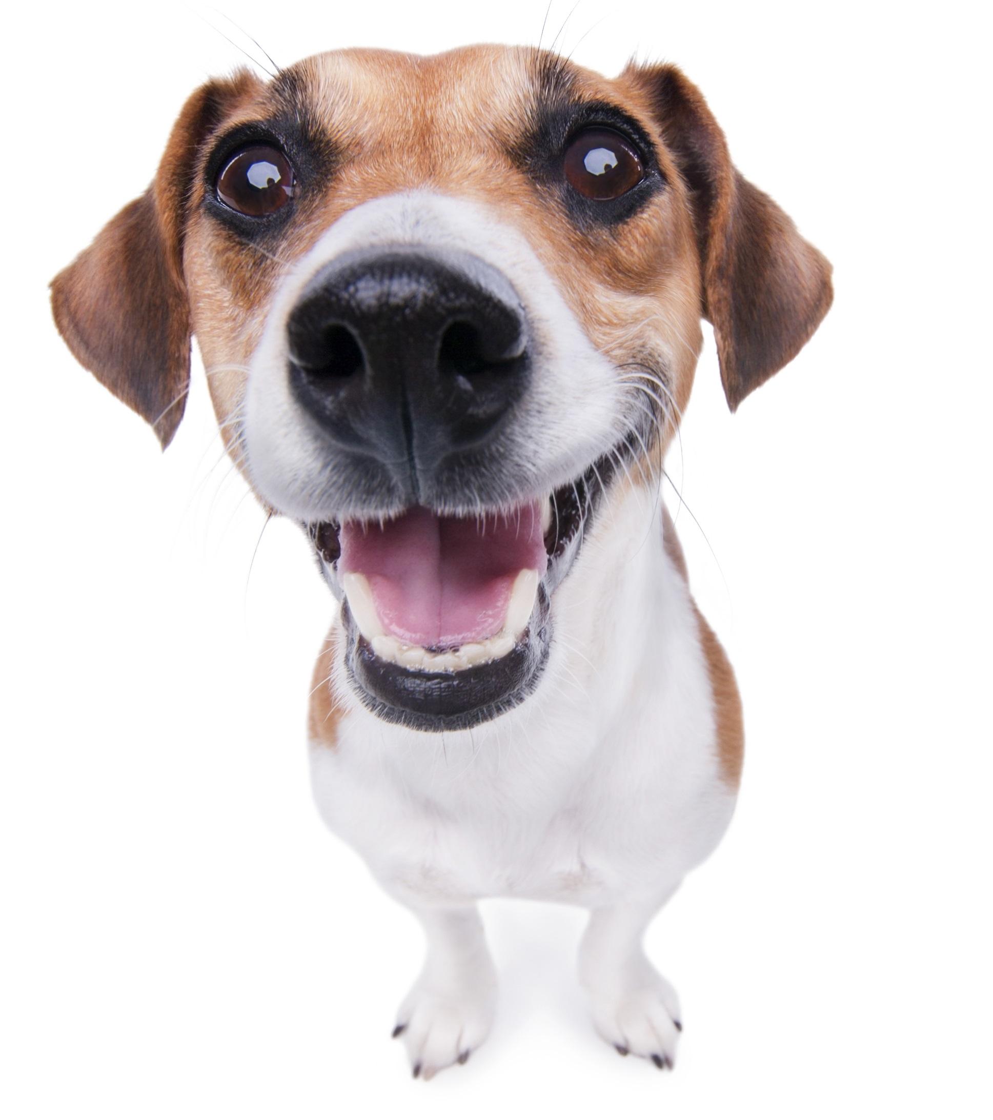Smiling_Dog-1.jpg